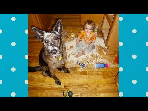 Ready To Laugh Hard ★ Nothing Make Baby Laughing Rather Than a Dog   Dog love Baby