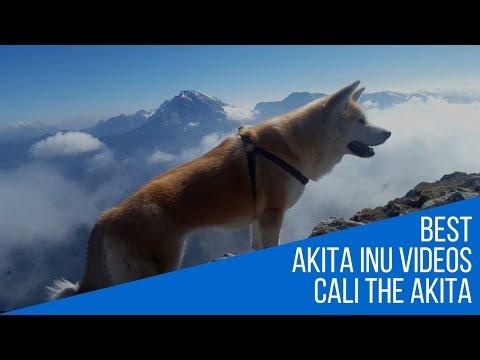 Best Dog Breed Akita Inu - Extreme Mountaineering (Japanese Akita, 秋田犬)