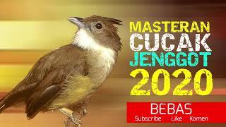 Download Lagu Cucak Jenggot Jawa Gacor Masteran Burung Murai Batu kacer Cucak hijau dll mp3