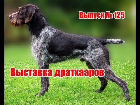 Выставка дратхааров | Выпуск №125 (UKR)