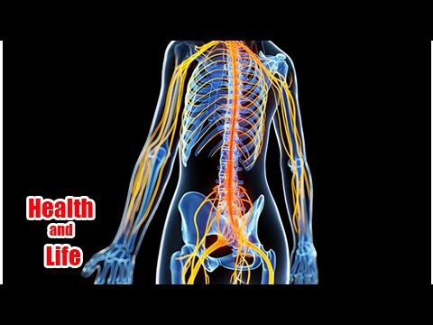 Neuroscience Education Seen Improving Chronic Spinal Pain