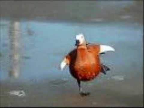 Weird Al Yankovic - I want a new duck