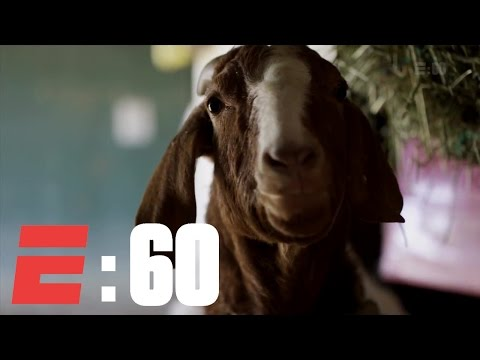The Derby Horses And Their Barnyard Buddies   E:60   ESPN Archives