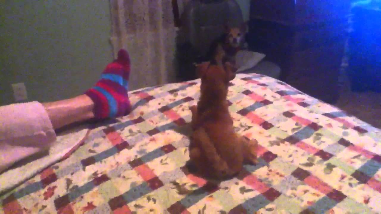 Dog Pees On My Grandma S Bed Youtube