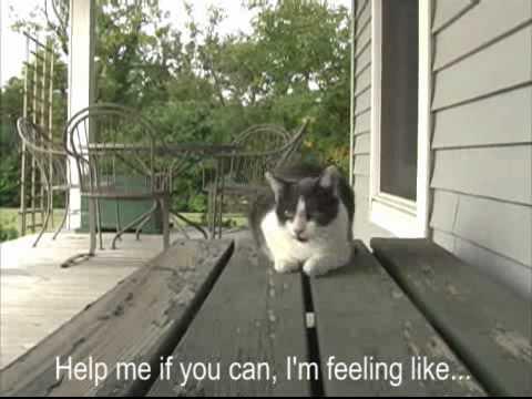 Amsterdam De Poezenboot / The Catboat: Help cat song