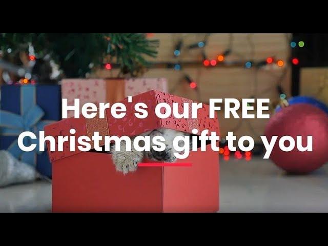 Amazing 50% OFF Christmas Offers At Corrie D Marketing Multi-Award Winning Digital Marketing.