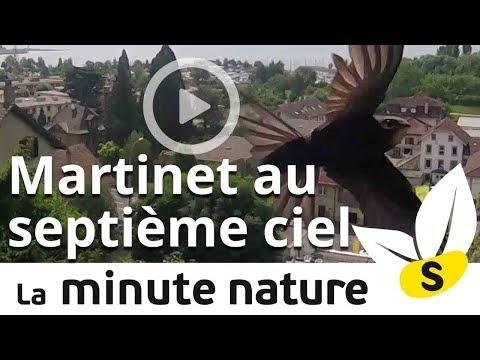 MARTINET AU SEPTIÈME CIEL (No 48)