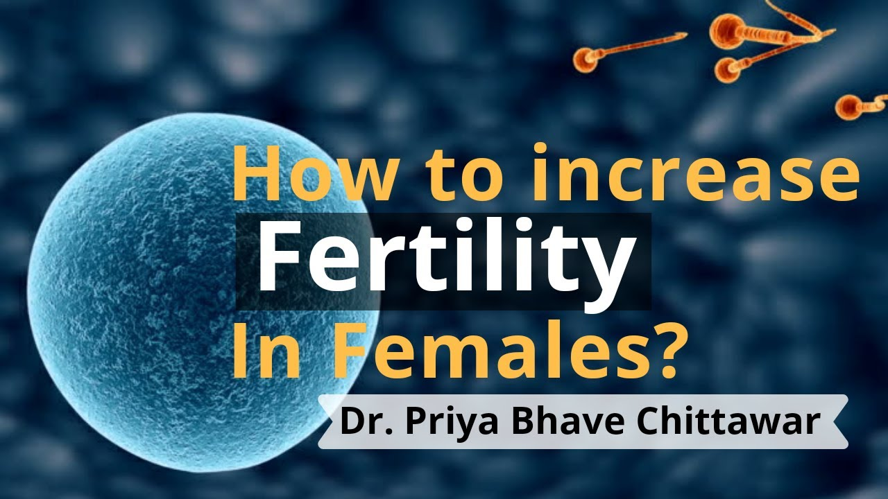 Download How to Increase Fertility in Women ! Fertility Expert Advice for Women
