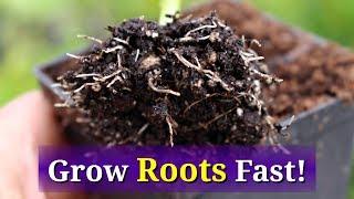 Grow Hydrangea from Cuttings: Fast, Easy Method