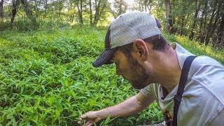 STRANGE PLANTS DEER LOVE - Summer Scouting Tips