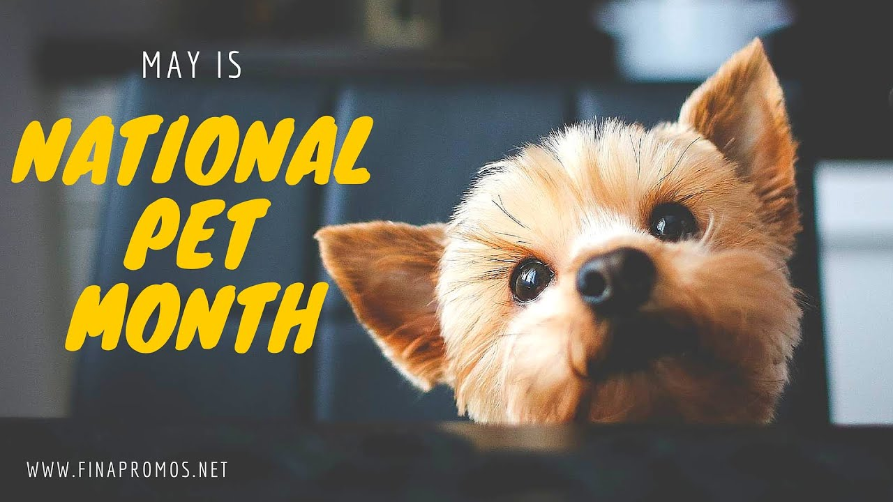 May is National Pet Month - YouTube