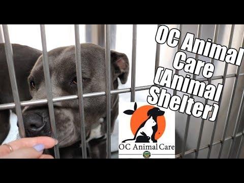OC Animal Care Vlog (Animal Shelter)