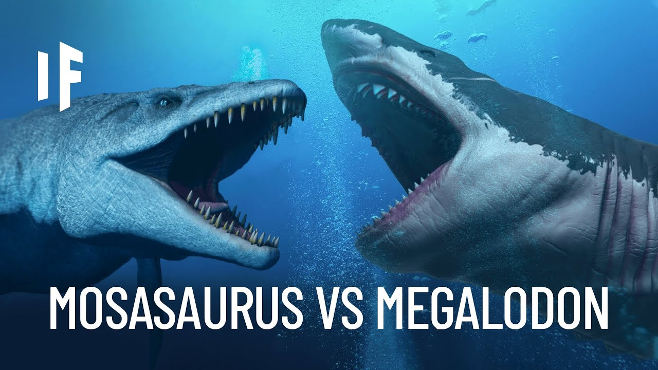 Download What If the Megalodon Shark Fought the Mosasaurus?