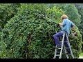 ¿Pueden invadir mi parcela las ramas o arbustos de mi vecino?