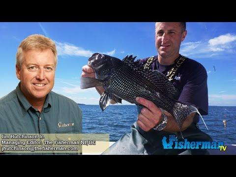 October 20 2016 new jersey delaware bay fishing report for Barnegat bay fishing report