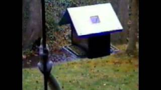Shocking Attempts To Raid Squirrel-off Solar Powered Squirrel Proof Bird Feeder