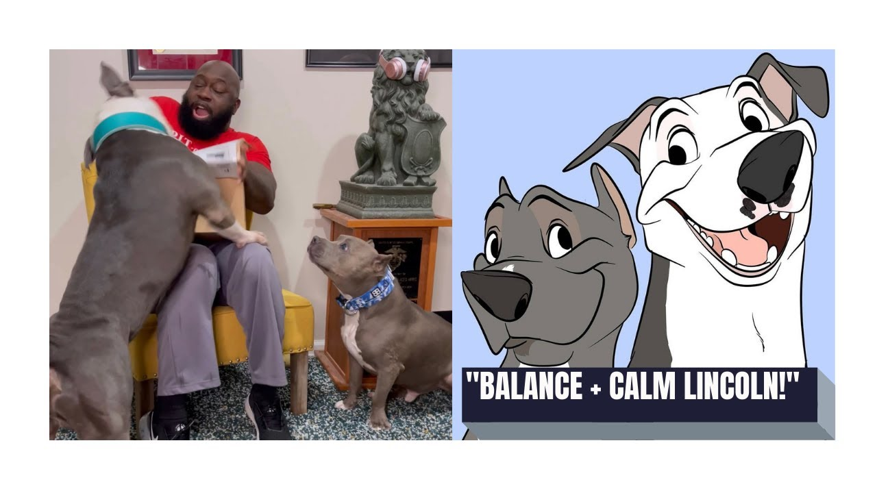 Treat Unboxing - Dad vs Dogs : Spoiler Alert, Dad goes down!
