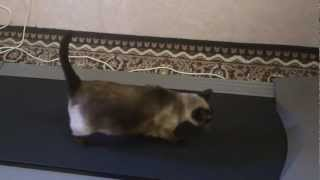 Наша Кошка на беговой дорожке!!!