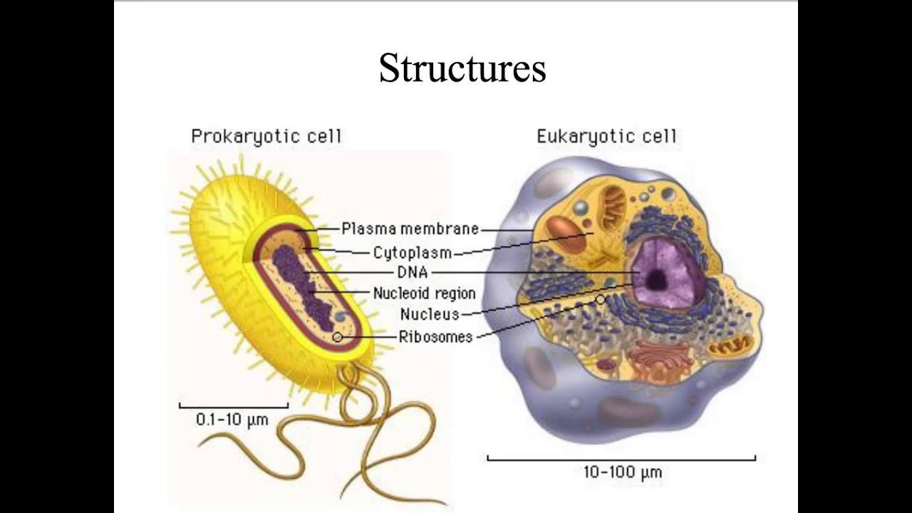 Unit 3 - Online Video Tutorial on Cell Theory, Structure & Function ...