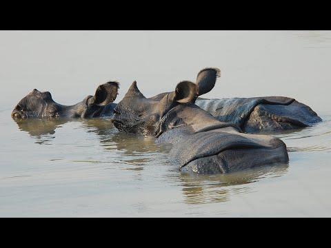 Tributaries Of The Karnali River - Wildlife Of The Terai