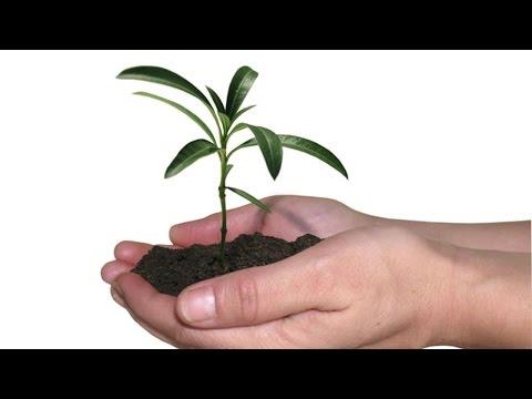 Curso CPT Como Produzir Mudas Arbóreas de Valor Comercial