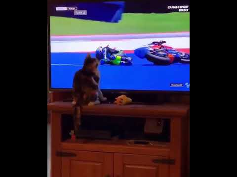 MotoGP rider down paws by cat