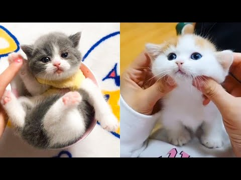 Baby Cats – Cute and Funny Cat Videos Compilation #23 | Aww Animals