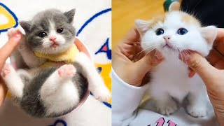 Baby Cats - Cute and Funny Cat Videos Compilation #23   Aww Animals