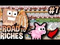 1000+ MAGIC BACON TREES [PIGLET?] | Road To Riches #7 | Growtopia