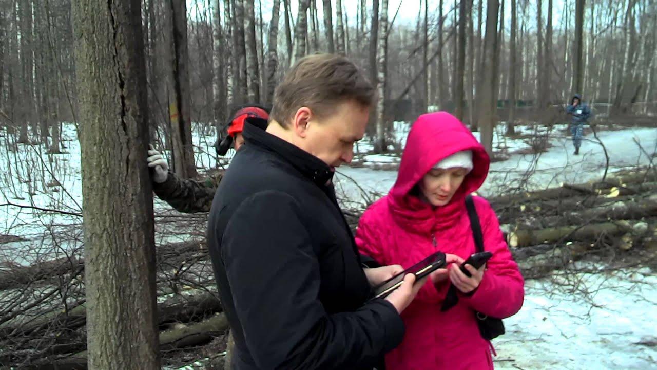 незаконная вырубка деревьев Москва