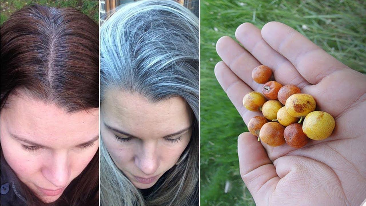أوراق هاته البذور تعيد لكي الشعر الى لونه الاصلي سبحان لله لن تبقى شعرة واحدة بيضاء