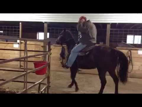 AQHA Gelding for Sale- Safe-Sound-Trained
