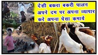 देसी बकरा बकरी पालन व्यवसाय   how to bakra bakri business