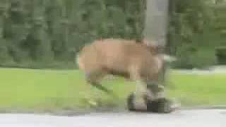 Video Venado le saca la mierda a un perro por pendejo download MP3, 3GP, MP4, WEBM, AVI, FLV November 2017