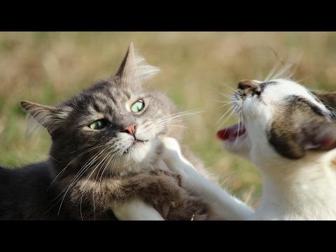 CAT DIES IN FIGHT!