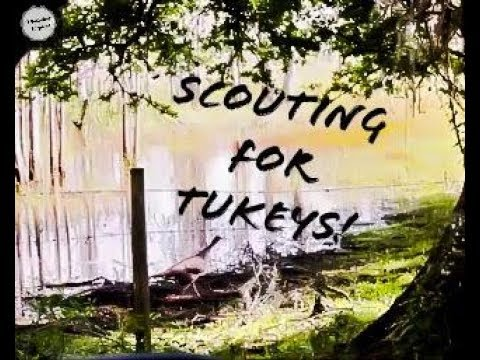 Scouting For Osceola Turkey's On Public Land!
