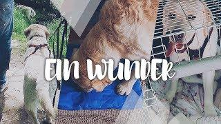 Bruno ist ganz anders | Welpentreffen | Kühlmatte FAIL | Hunde Vlog #1