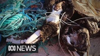 Researchers collect tonnes of plastic from polluted island, but leave it all behind | ABC News
