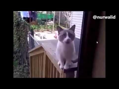 Yang bisa bahasa kucing, tolong di translate kan please