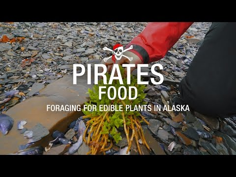28. Foraging For Edible Plants In Alaska
