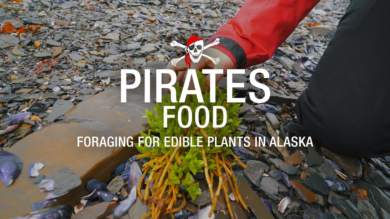 28 foraging for edible plants in alaska youtube