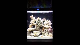 Reef Radiance Lumentek 240 Pro