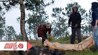 Xác người cháy đen, biến dạng ở Đà Lạt | VTC