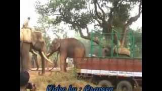 Puttur Parusharama Elephant .......