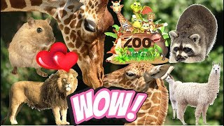 ZOO Animals Funny Kids Family Video Vlog Cartoon