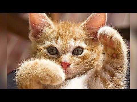 Смешные кошки и коты Сентябрь 2019. Новые приколы с котами funny cats animals 2019 #99