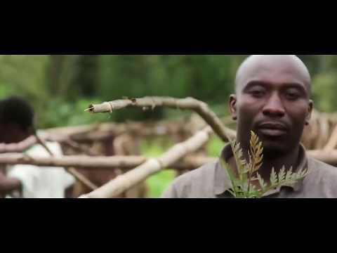 Dominique Bikaba, Democratic Republic of Congo - Whitley Awards 2018