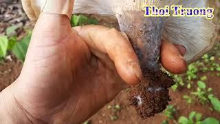 Tai nấm độc to không tưởng