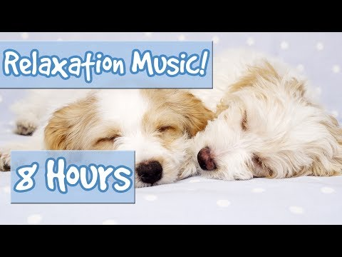 BEST PLAYLIST FOR CALMING PUPPIES. Music to Relax My Puppy, Special Therapy Music for Dogs 🐶 🎵 💤