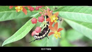 Publication Date: 2019-03-19 | Video Title: 「愛‧濕地」短片創作比賽 - 亞軍